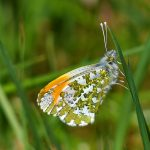 Picture of a butterfly/moth sitting on grass