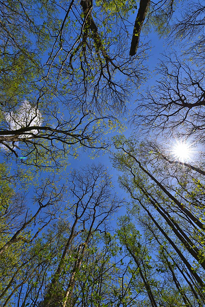 Picture of a view straight up on a sunny day in the woods