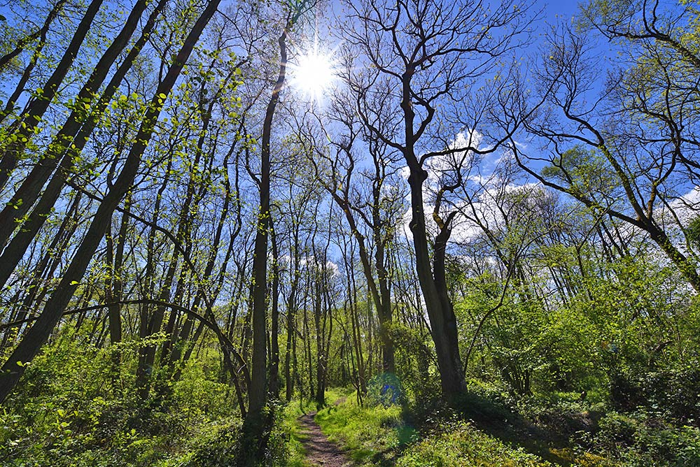 Picture of a sunny day in the woods