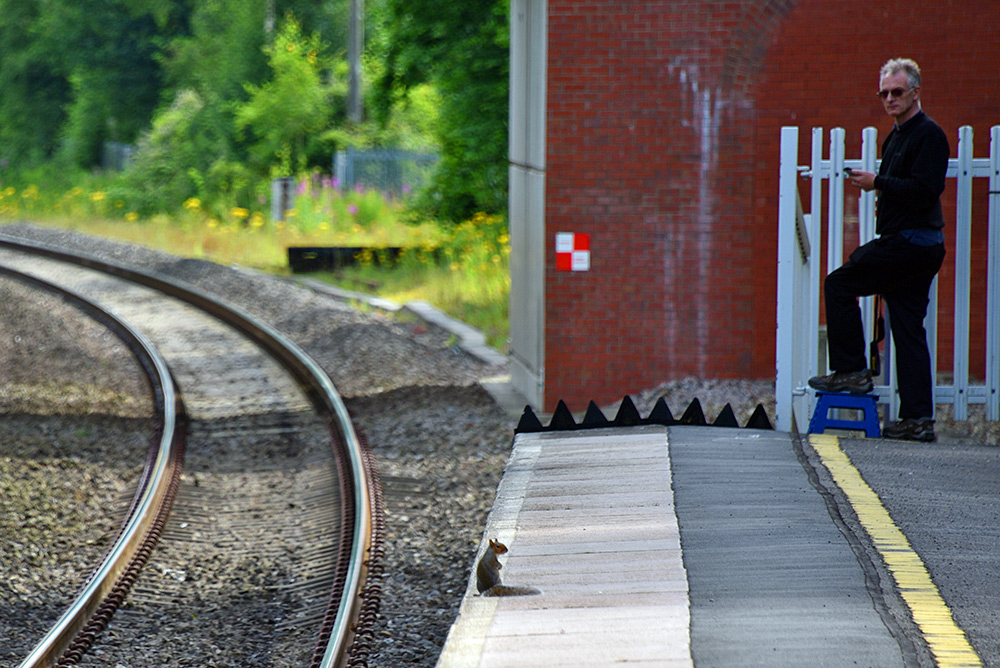 Picture of a squirrel on a train station platform