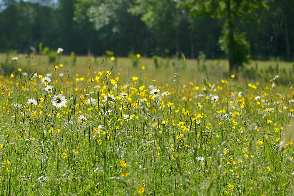Picture of colourful wildflowers in a meadow