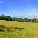 Panoramic picture of a meadow, sheep grazing in the distance
