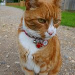 Picture of a cat on a towpath