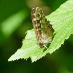 Picture of a butterfly on a leaf in the sunshine