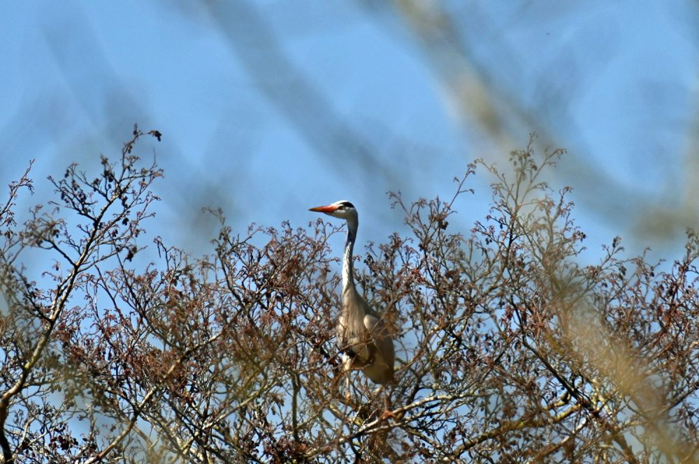 Heron in (and behind) distant trees
