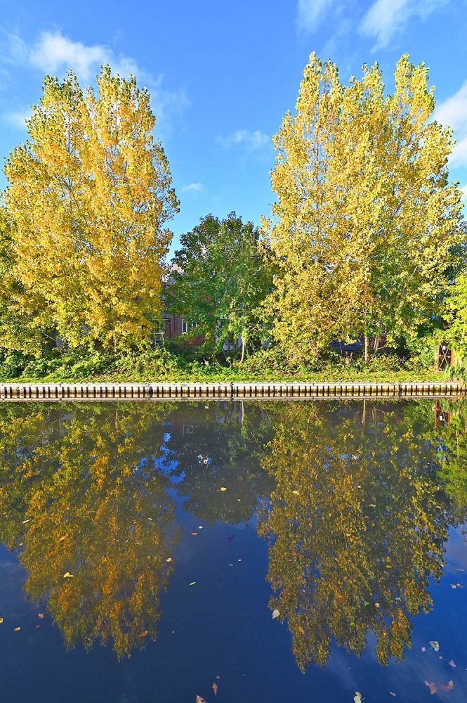 Picture of two trees in their autumns colours reflecting in the water of the canal