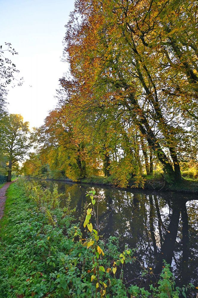 Picture of Chestnut trees in their autumn colours along a canal