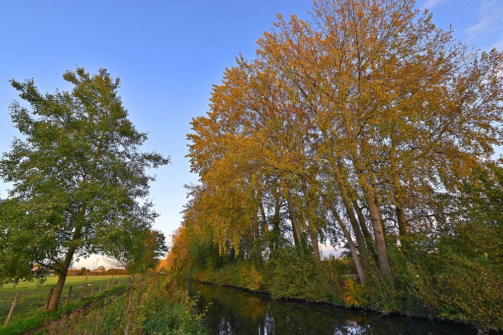 Picture of colourful autumnal trees along a canal