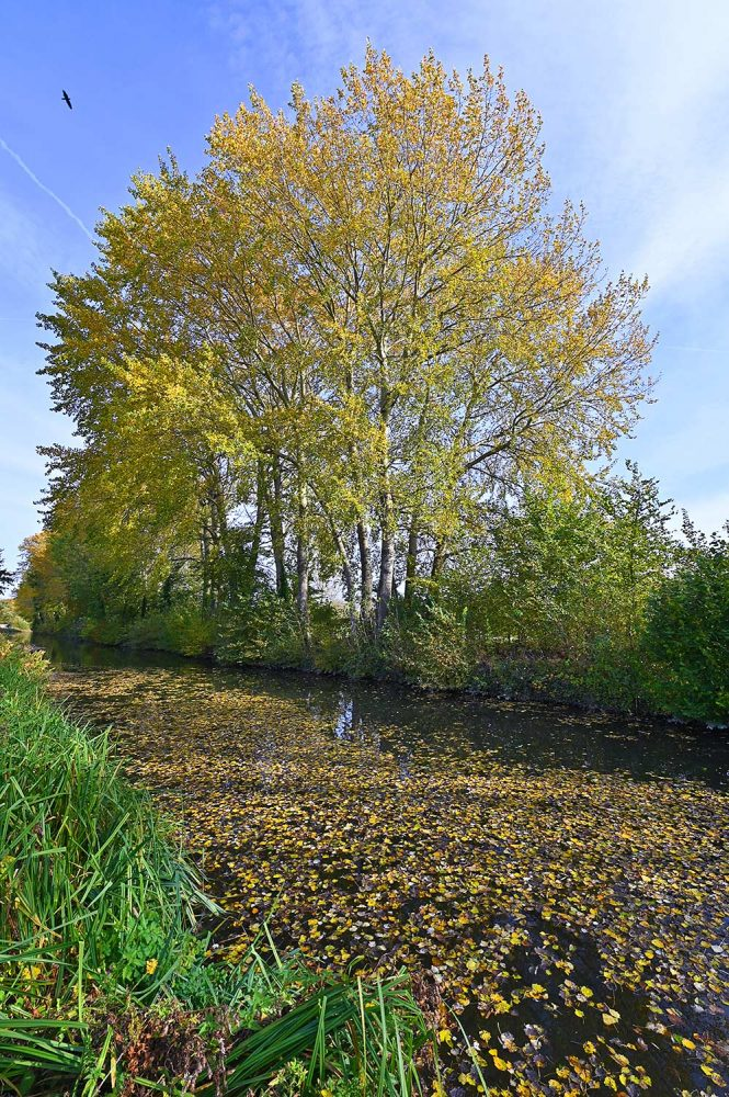 Picture of colourful autumnal trees along a canal and floating fallen leaves on the canal