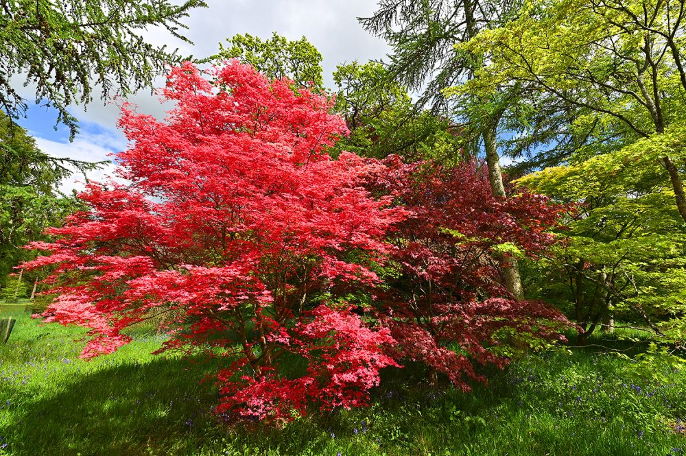 Picture of trees in various shades of red and green leaves