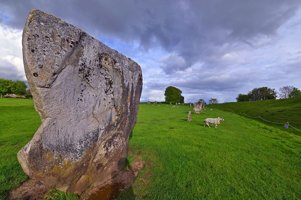 Picture of standing stones in a stone circle on a sunny May evening, a sheep wandering past